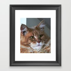 Orange cat with yellow eyes Framed Art Print