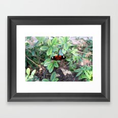 Butterfly Red Framed Art Print