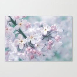 Spring 0120 Canvas Print