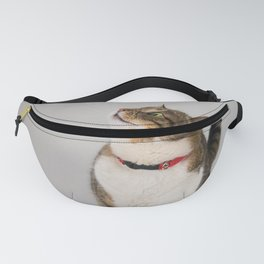 curious cat looking up Fanny Pack