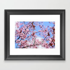 Pink spring. Sky dreams Framed Art Print