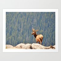 Velvet Elk Art Print