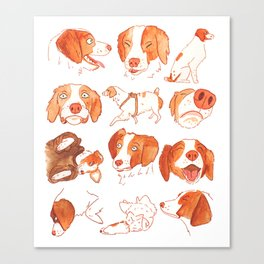 Faces and Poses of a Brittany Spaniel Canvas Print