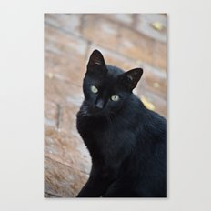 Black Cat - Monda, Spain Canvas Print