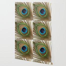 Peacock_20171201_by_JAMFoto Wallpaper