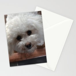 Cavachon Stationery Cards