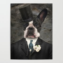 Sir Duncan - Boston Terrier Portrait Poster