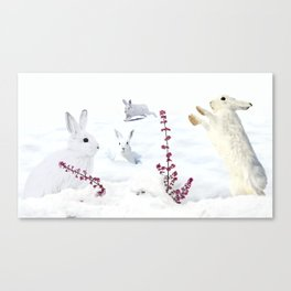 White rabbits dancing around red erica in snow mountain. Canvas Print