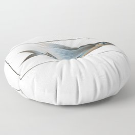 Marcus Elieser Bloch - Middle-Pinned Flying-Fish Floor Pillow