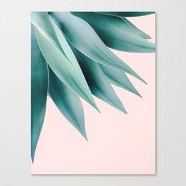 Agave flare Canvas Print