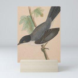 Vintage Print - A History of the Birds of Europe (1859) - Sardinian Warbler Mini Art Print