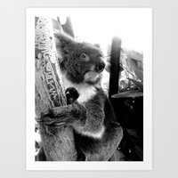 koala Art Prints featuring Koala by Alan Hogan