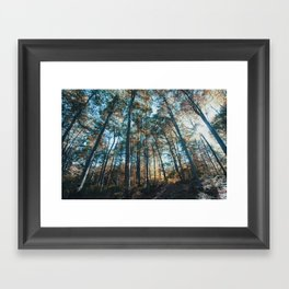 into the woods 07 Framed Art Print