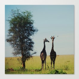 two tall.  Canvas Print