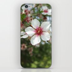 Blossom Flower iPhone & iPod Skin