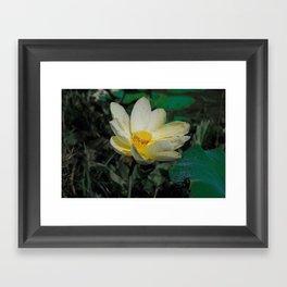 pond lily Framed Art Print