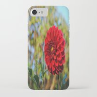 dahlia iPhone & iPod Cases featuring Dahlia by Renee Trudell