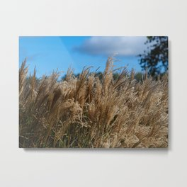 Chinese Silver Grass in a Yorkshire Garden Metal Print