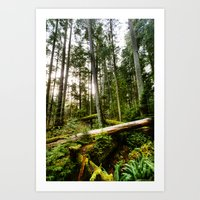 forrest Art Prints featuring Forrest by ILIA PHOTO + CINEMA