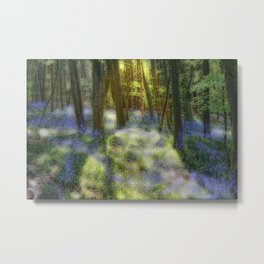 Sunny Bluebell Wood  Metal Print