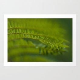 Jacaronda Mimosifolia Serie 1 No. 2 Art Print