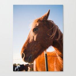 Horse. Palo Duro Canyon, Texas. Canvas Print
