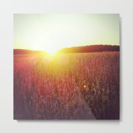Sunset over cornfield Metal Print