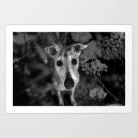 greyhound Art Prints featuring greyhound by Lucie B