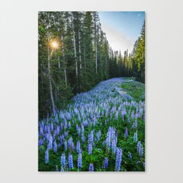 High Country Lupine - Purple Wildflowers in Montana Mountains Canvas Print