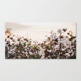Cotton Field 6 Canvas Print