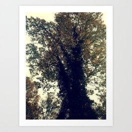 The Trees - Just The Two Of Us Art Print