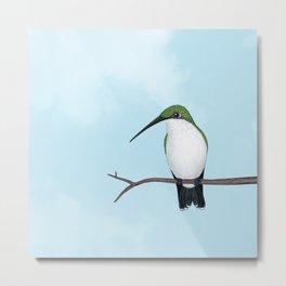 contemplative lady (ruby-throated hummingbird) Metal Print