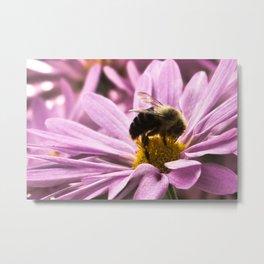 Bumble Bee Pink Metal Print