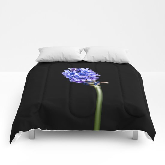 Lavandula pinnata Comforters