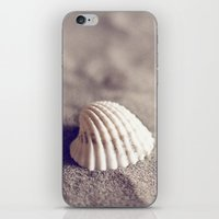seashell iPhone & iPod Skins featuring Seashell by Dena Brender Photography
