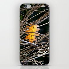 Golden Leaf iPhone & iPod Skin