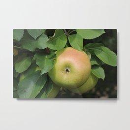 Yellow Apples Metal Print