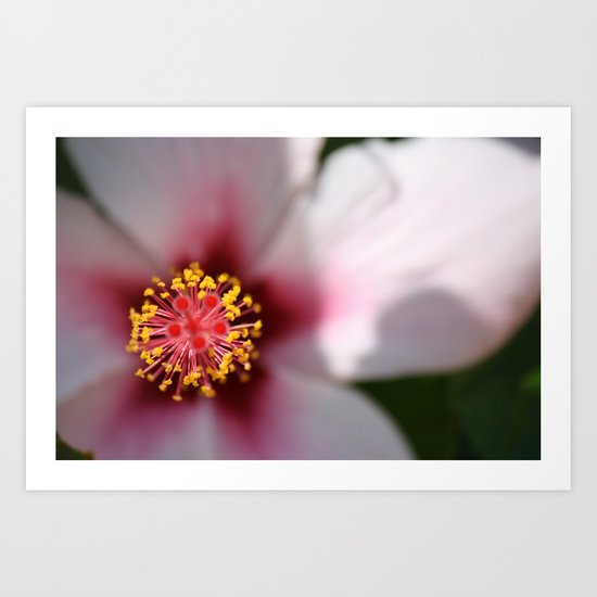 Turkish Flower Art Print