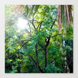 The enchanted woods | Bright tropical forest palm tree exotic green photography Canvas Print