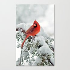 Cardinal on Snowy Branch Canvas Print
