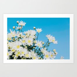 Daisy flower, beautiful view, daisy hill, View Poster, Canavas Print, Wall Hanging Art Print