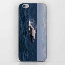 Humpback Whale Breaching iPhone Skin