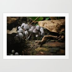 Mushrooms!! white mushrooms! Art Print