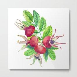 dog-rose watercolor botanical illustration Metal Print