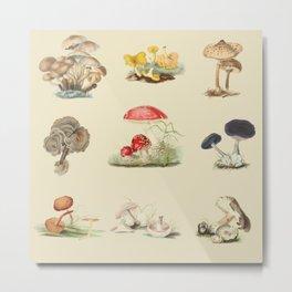 British Mycology Metal Print