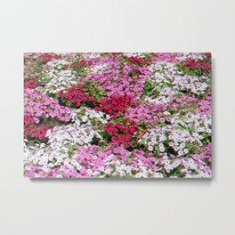 Pink & White Field Metal Print