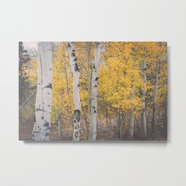 Naked Trees and Fall Leaves Metal Print