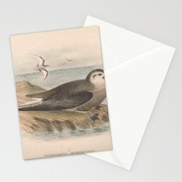 021 Mottled Petrel pterodroma inexpectata4 Stationery Cards