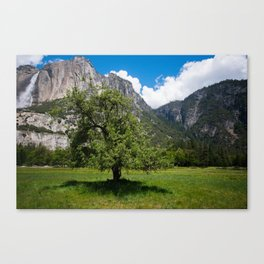 Yosemite Valley Tree Canvas Print