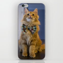 Sir Pudding of Butterscotch iPhone Skin